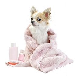 Dog Spa Treatment Indianapolis