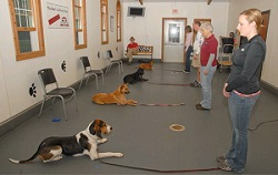 Dog Training Class Indianapolis