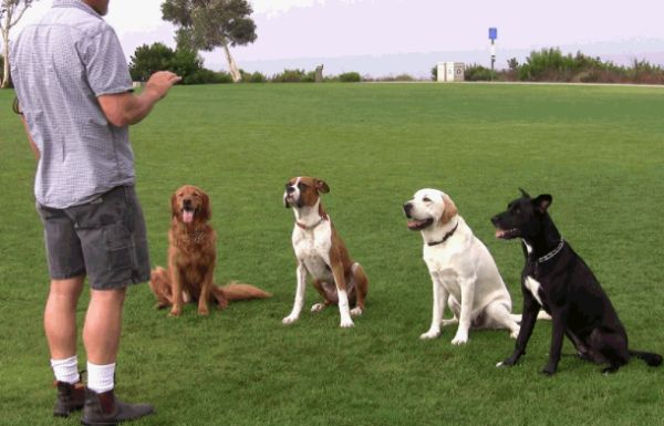 Dog training- Indianapolis-nov-2014