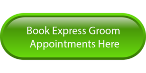 book-express-green