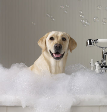 dog grooming  bath picture-Indianapolis location -