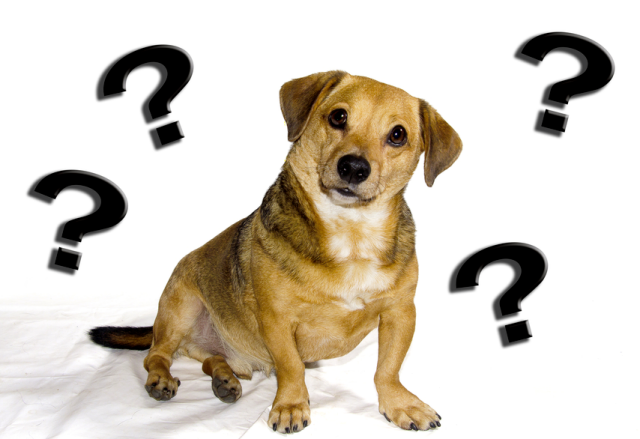 Dog-with-Question-Marks