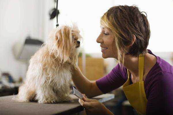 Indianapolis dog groomer grooms dog
