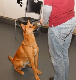 dog training class graduate 2014