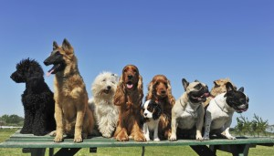 dog training class- 2014