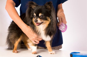 Indianapolis dog grooming service photo