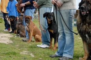 Indianapolis Dog Training class Sept 2014