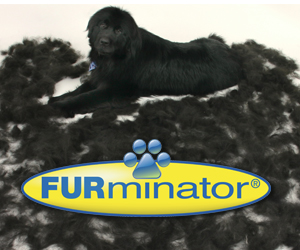 Indianapolis furminator shedless treatment