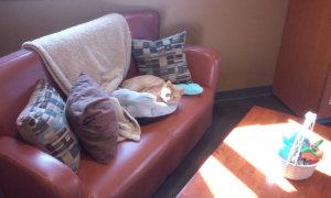 cat sunbathing in cat resort
