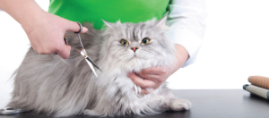 Cat Grooming Services In Indianapolis