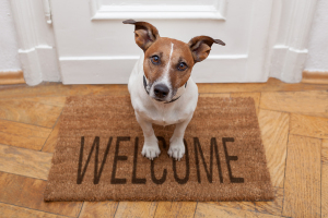 Pet boarding Indianapolis guest dog welcome mat