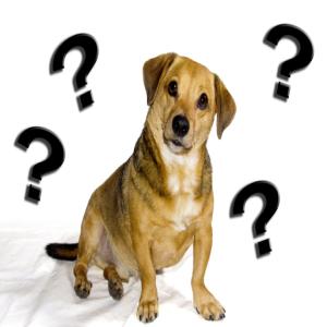 Pet boarding questions
