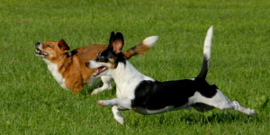 dogs having fun at our pet boarding Indianapolis location