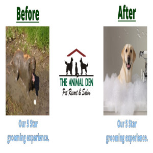 Dog grooming before & after
