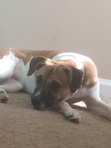 kai - puppy bowl Indianapolis player