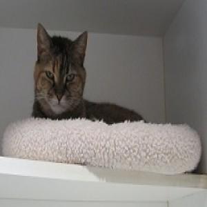 Lily James- cat resort guest