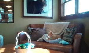 cat lounging in cat resort- Indianapolis-2015