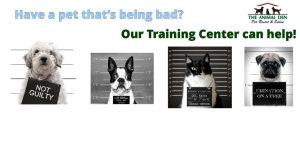 indianapolis dog training funny mugshots