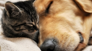 cat and dog laying side by side